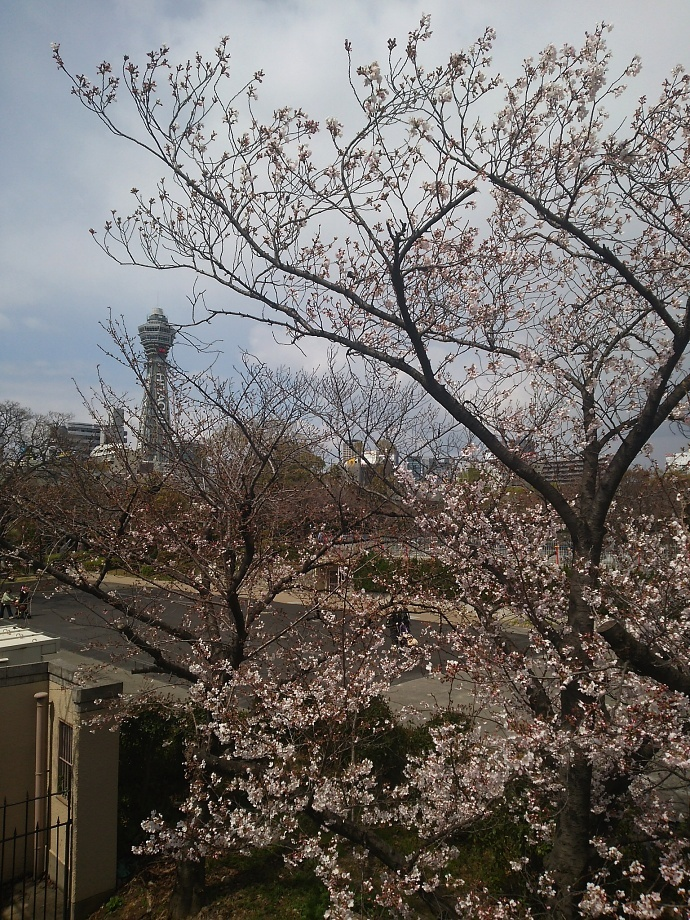 190404桜 (3)
