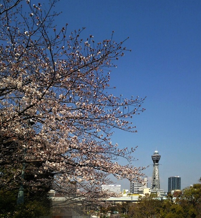 190404桜 (2)