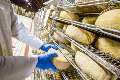 チーズ 工場