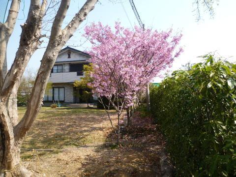 春爛漫(1)