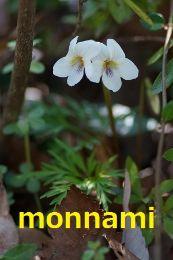 monnami