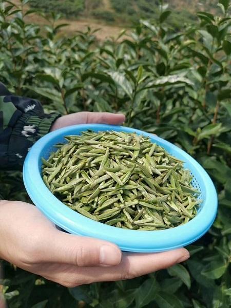 2019年 白茶(1)