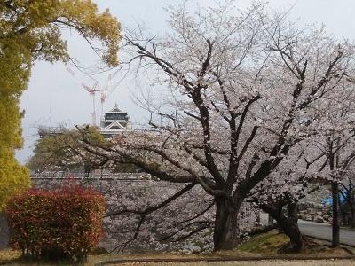 桜201902