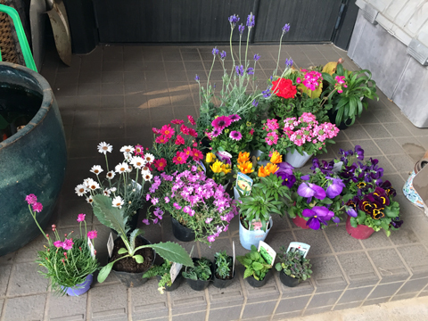 flowers_040819