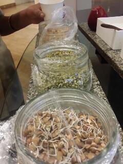 スプラウト 発芽豆