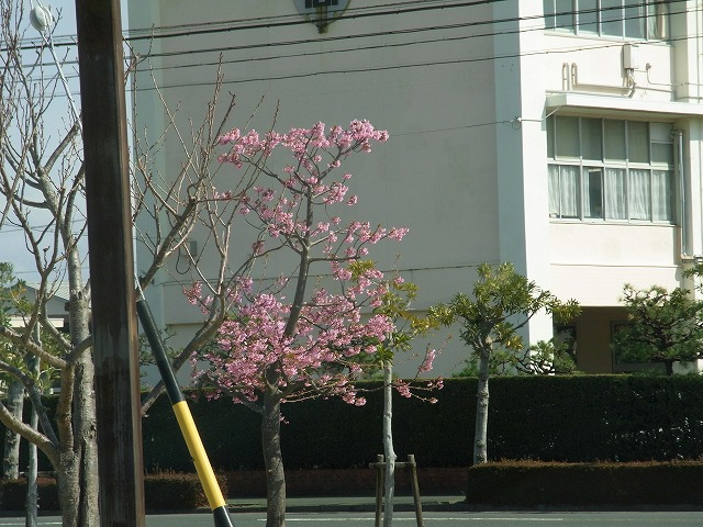 桃色の花②