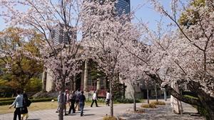 旧桜宮公会堂と桜