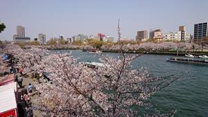 春のうららの大川