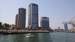 OAPと桜