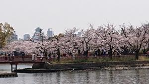 遠くに大阪城天守閣が