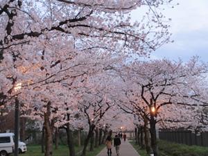 薄暮の桜之宮公園