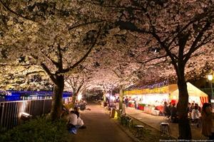夜桜桜之宮公園