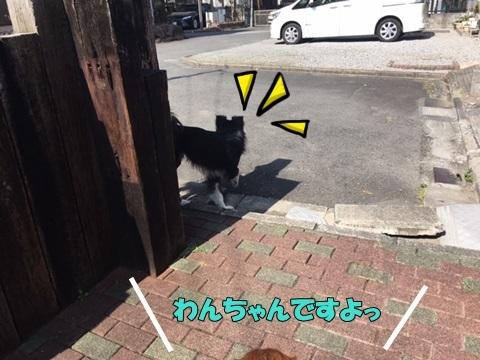 image119032701.jpeg