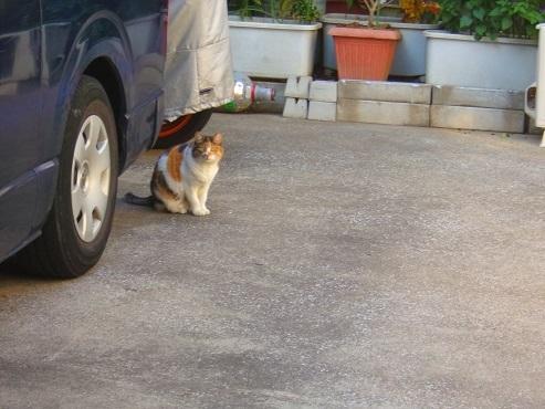 通りすがりに見かけた猫(782)