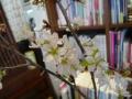 ナンフェア 桜