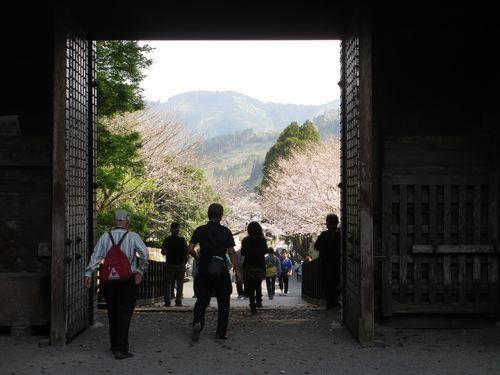 IMG_9243大手門の桜2
