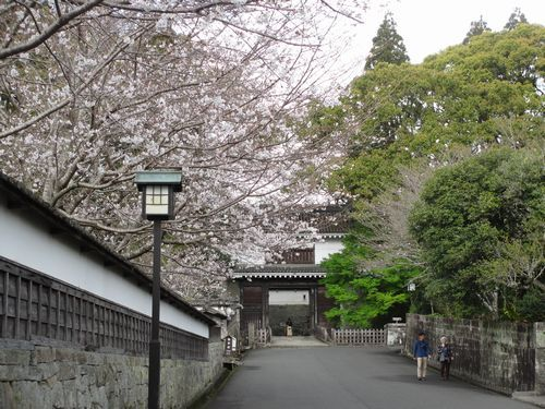 IMG_9239大手門の桜