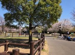 公園野炊地