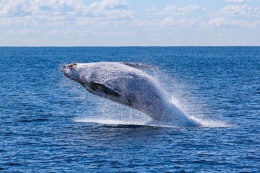 Whale_fish-1836399__340.jpg