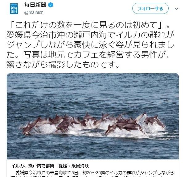 【瀬戸内海】愛媛県の今治市沖で「イルカ数十頭」の群れが泳いでいるのが見つかる…海岸近くでこれだけの群れがいるのは珍しい