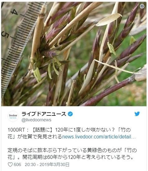 【珍しい】佐賀県有田市で120年に1度しか咲かないと言われる「竹の花」が咲く