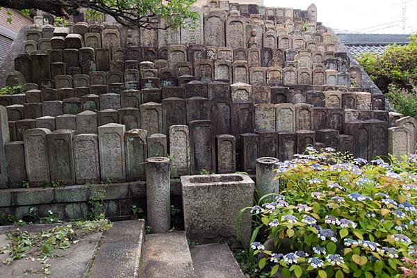 清音寺墓石と紫陽花