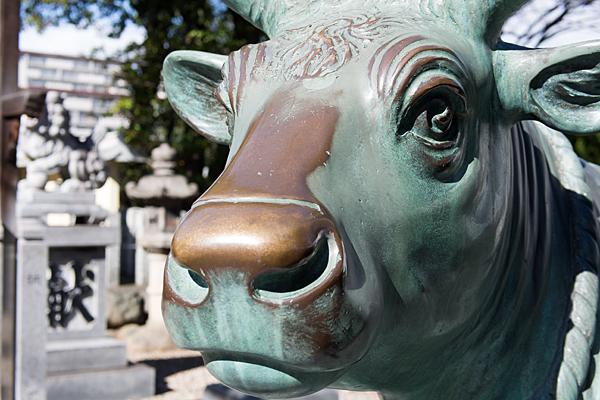島田神社天満宮の牛像