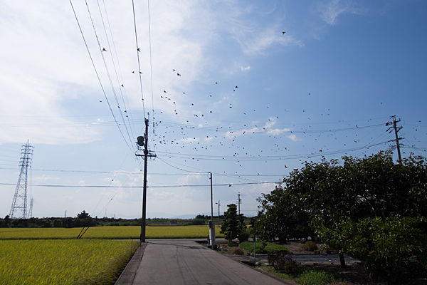 電線と鳥2