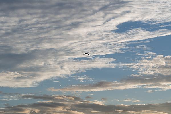 空と雲とカラス