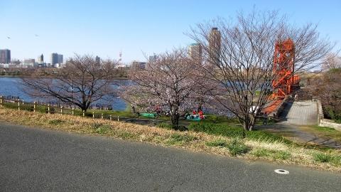 少しだけ咲いている桜の下で花見の方がいました。