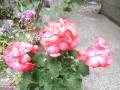 DSCN6810.jpg