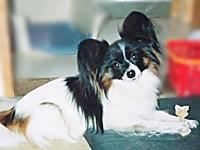 わが家の初代犬