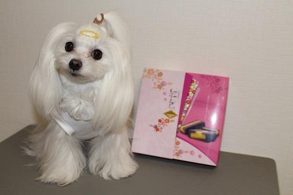 2019.04.17 沖縄のお土産+我が家の桜(海棠)-1