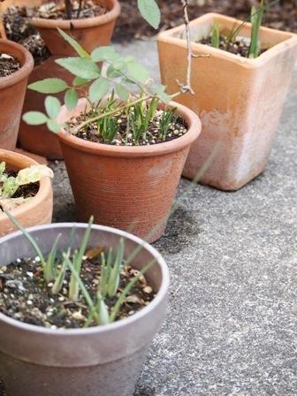my-garden 050