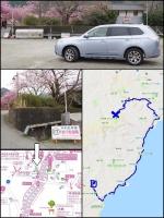 伊豆河津町の河津桜祭2019 河津桜まつり2019 駐車場