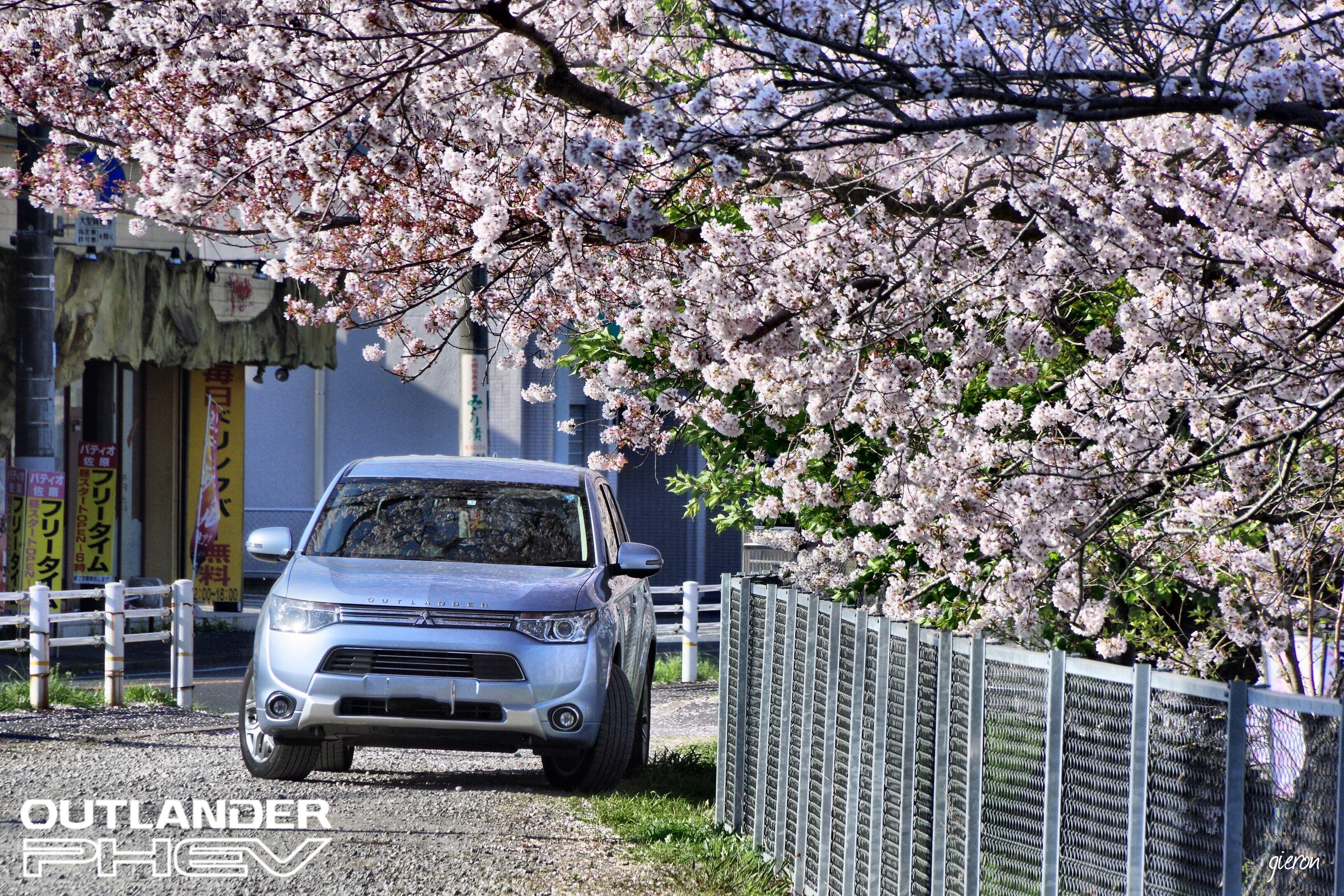 桜とクルマ アウトランダーphev
