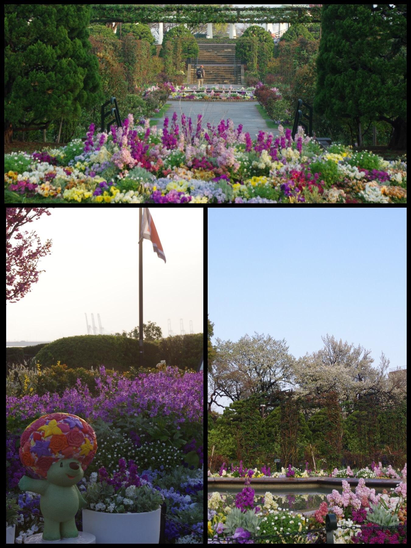 2019 桜 ガーデンネックレス 横浜港の見える丘公園