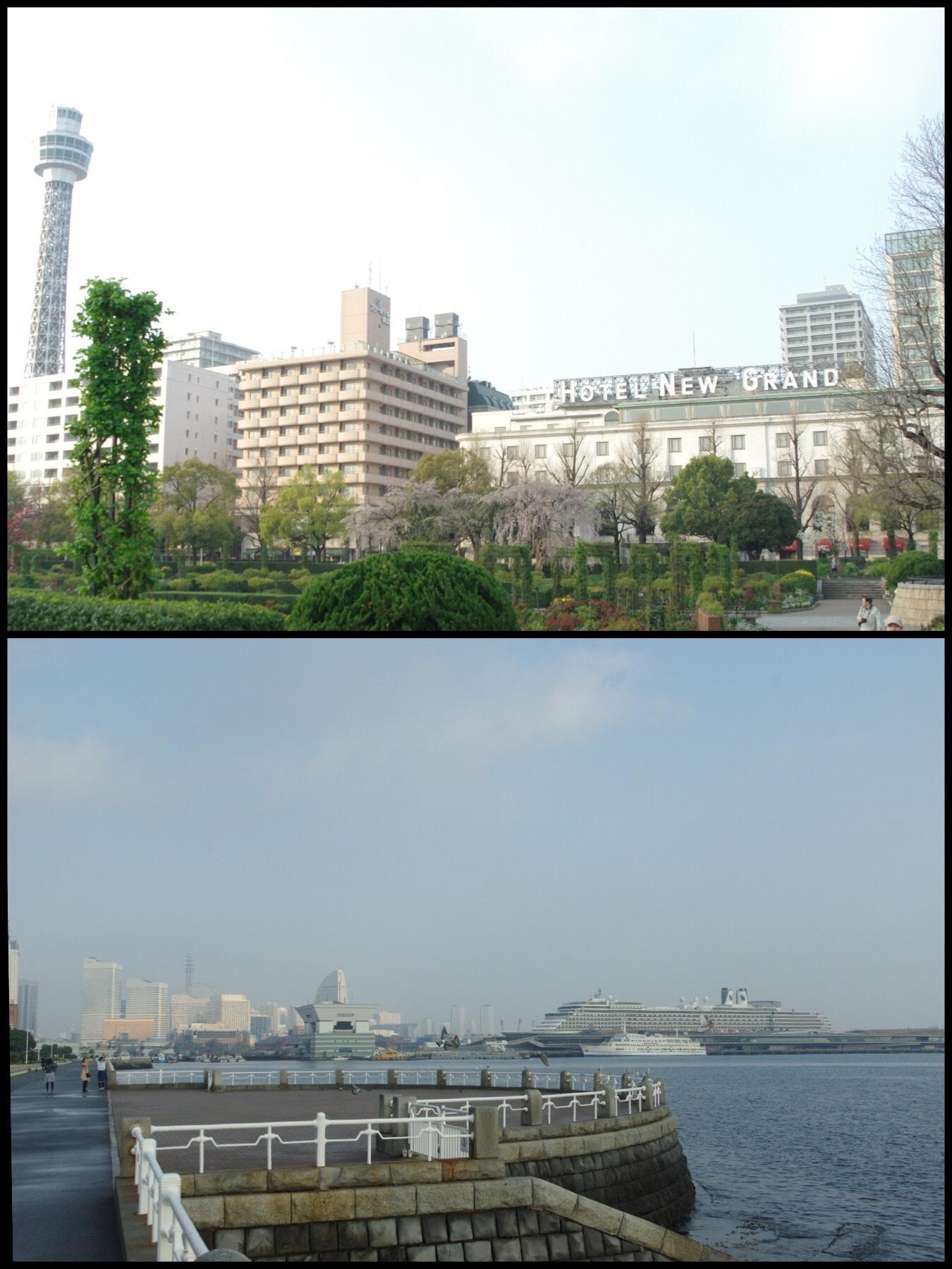2019 桜 横浜 山下公園