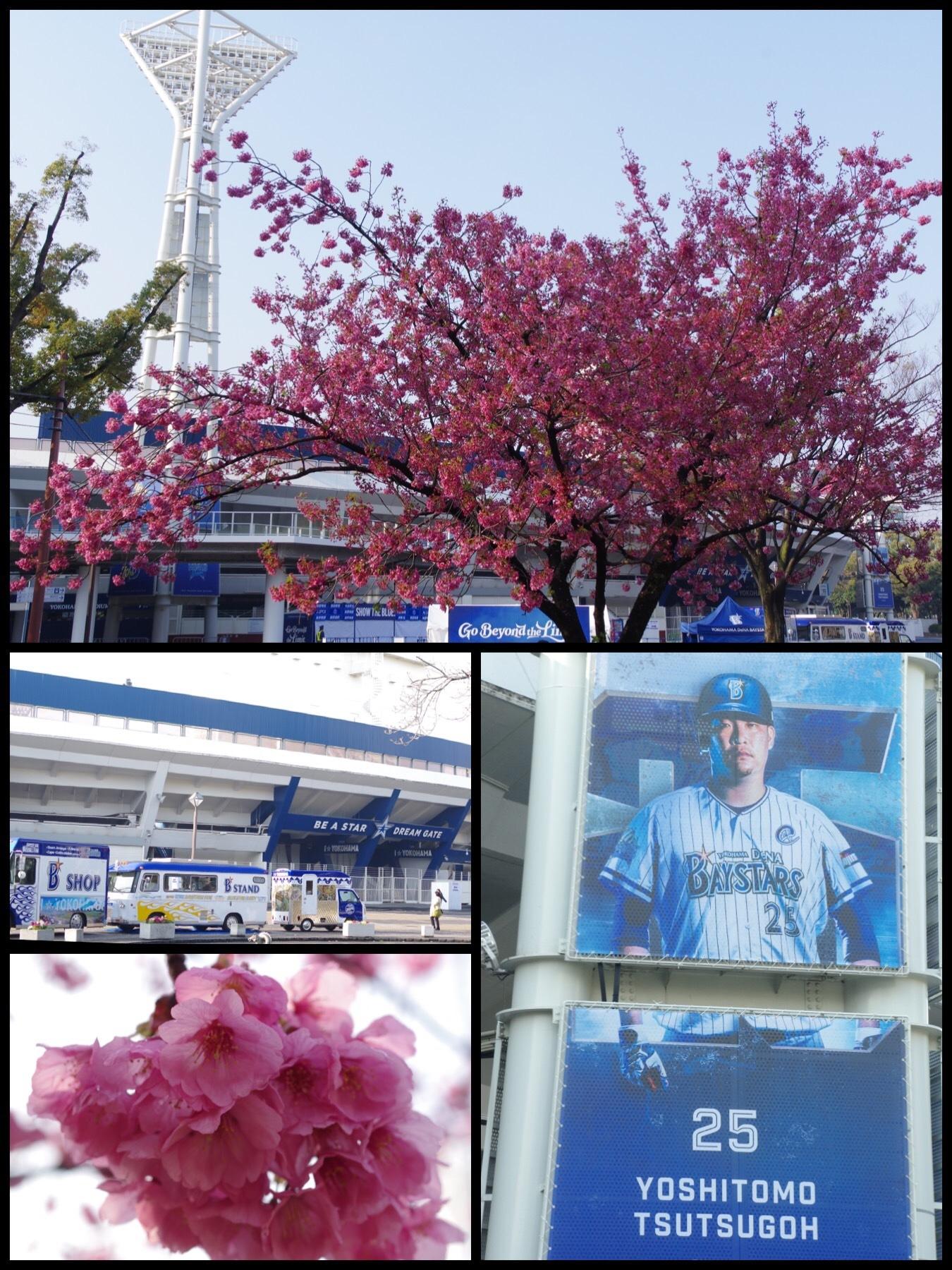 2019 桜 チューリップ 横浜公園 横浜スタジアム