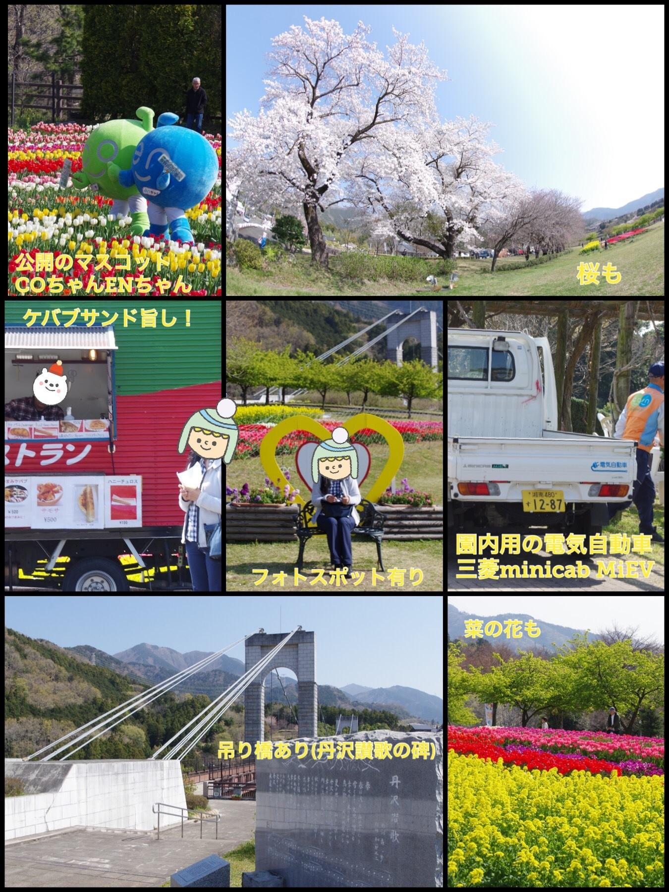 秦野戸川公園 チューリップ