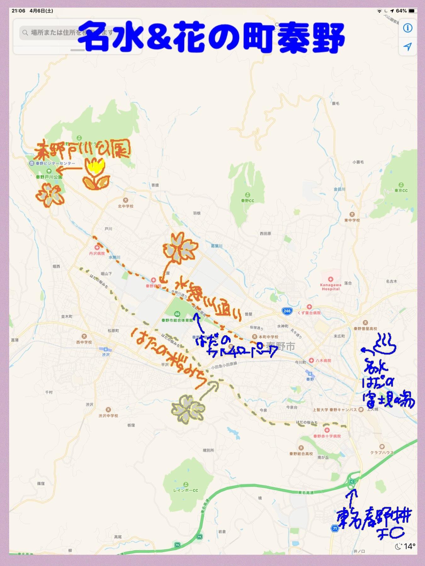 秦野 桜 チューリップ マップmap カルチャーパーク 水無し川
