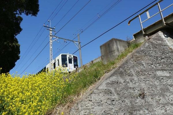 東武線と菜の花