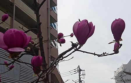 20190319_01.jpg