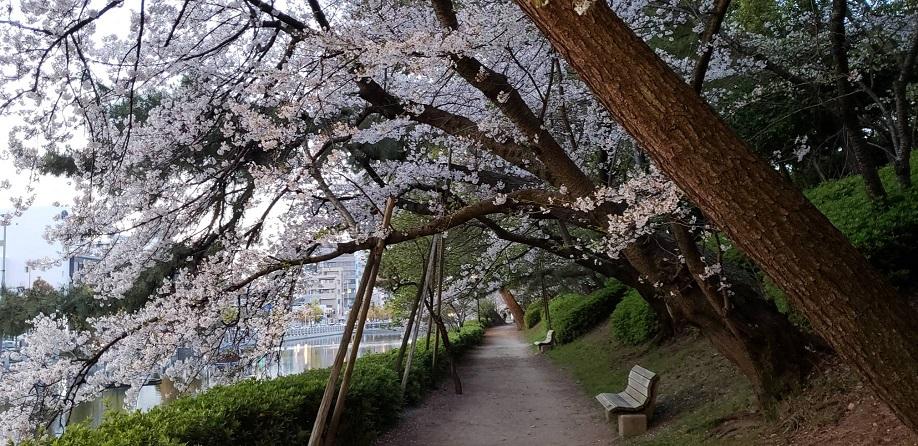松山のお堀遊歩道 ミーママより7