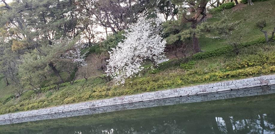 松山のお堀遊歩道 ミーママより8