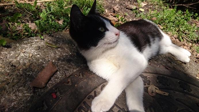 松山総合公園の白黒子猫2松山総合公園の警戒心が強かった白黒子猫ちゃん✨❤️✨最近はすっかり慣れ、甘えて触らせてくれるようになりました