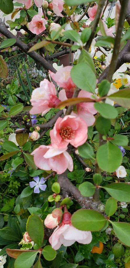 ミーママの実家の庭で咲いていた花達3