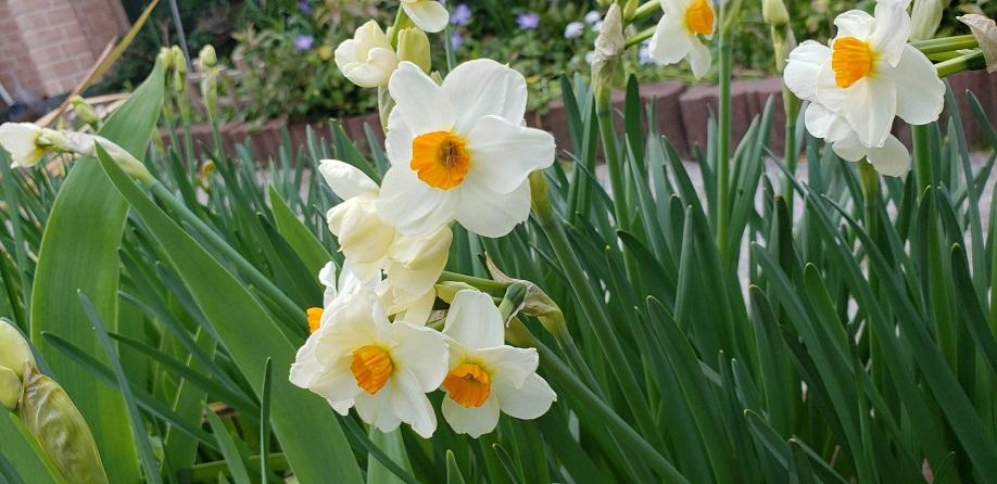 ミーママの実家の庭で咲いていた花達5