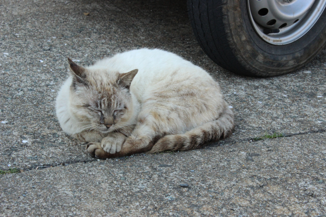 相島の猫ちゃん