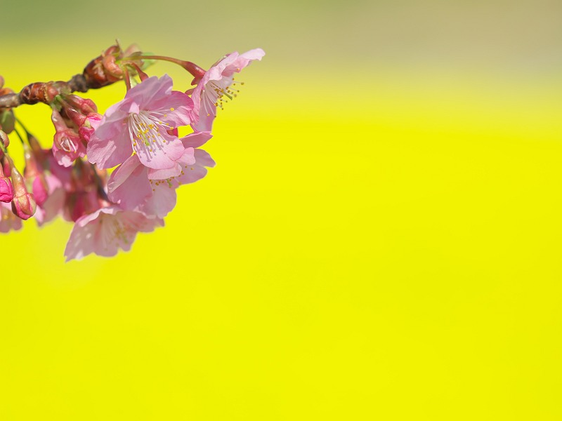 春色の小風景